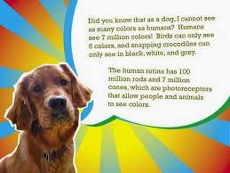 Color Blind What Do They See Rules Of The Jungle Are Dogs Color Blind