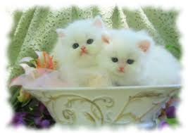 cats delaware free classified ads