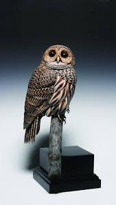 owl wood carving owl wood carvings wildfowl carving