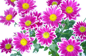 flowers images anniversary free pictures on pixabay