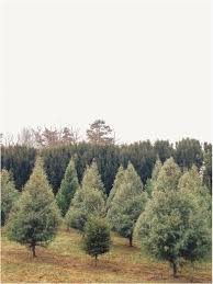christmas tree farm tennessee christmas lights decoration