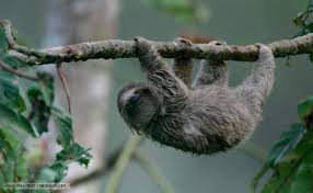 Tropical Dry Forest Animals And Plants - bbc nature adapted to climbing videos news and facts