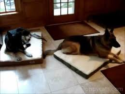 Comfortable Dog Comfortable Dog Beds By Alphapooch For German Shepherd Dogs Cat