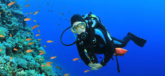 California snorkeling images Pelican rock cabo san lucas snorkeling scuba diving guided tours jpg