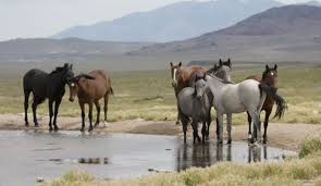 Tennessee wildlife tours images Wild horses go on blm adoption tour but is slaughter looming jpg