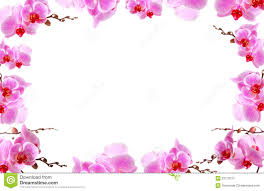 Flower Orchid Orchid Flower Border Design Stock Photo Image 35971900