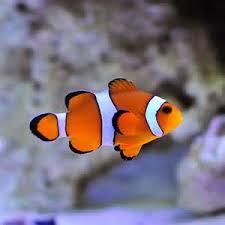 saltwater fish compatibility u2013 the aquarium setup filtration and