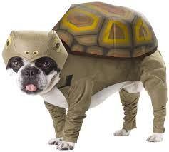 Tortoise Dog Costume Unique Gifts Ideas Pup O Ween