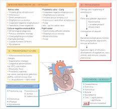 endocarditis myocarditis and pericarditis systemic infection
