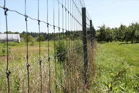 Deer Proof Fence For Vegetable Garden How To Keep Deer Out Of Garden Electric Fence The Best Deer 2017