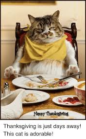 Thanksgiving Cat Meme - ppythanksgetng thanksgiving is just days away this cat is adorable