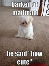 Puppy Memes - top 29 puppy memes memes animal and dog