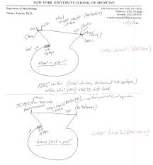 Cmu Map Addgene Cmv T7 Hosa2