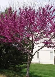 creations ornamental trees