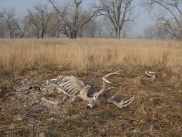 When Do Deer Shed Their Antlers by Shed Hunting The Fast Track To Herd Inventory Deer U0026 Deer