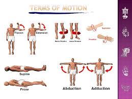 Human Anatomy Terminology Introduction To Human Anatomy