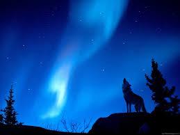 wolf howling aurora borealis 1024x768 standard image animals