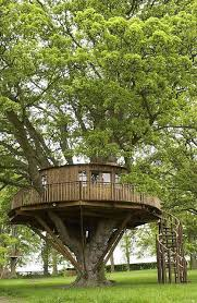 35 best treehouse images on a tree amazing tree house