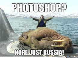 Walrus Meme - walrus memes best collection of funny walrus pictures