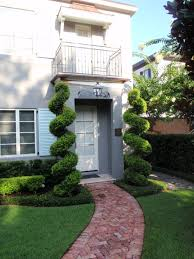 home decoration astonishing yard spiral topiary for awesome home