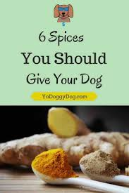 best 25 food for dogs ideas on pinterest human food for dogs