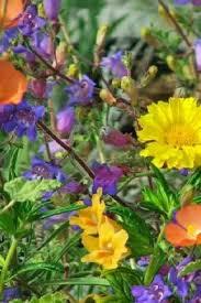 California Backyard Best 25 California Garden Ideas On Pinterest Drought Tolerant
