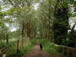 misc wraysbury avenue history paths berkshire trees leaves free