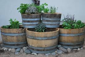 Half Barrel Planters by Have A Lawn And Eat Too U2013 The Edible Backyard Barrel Garden
