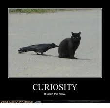 Crow Meme - curiosity it killed the crow very demotivationalcom meme on me me