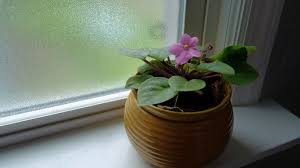 tips for turning houseplants why a houseplant leans towards light