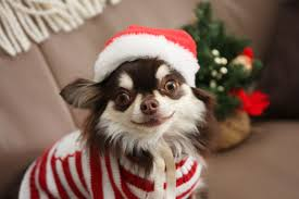 funny thanksgiving dog pictures today is the black friday of holiday pet booking