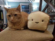 Cat Breading Meme - cat breading tumblr cat breading pinterest cat