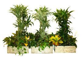 indoor plant arrangements best online flower shops in dubai uae for sale indoor plants