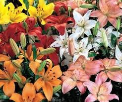 wholesale flowers wholesale flowers online wholesale flower wholesale fresh