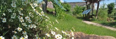native plants in texas legacy plaza u2013 cultural u0026 educational center in historic