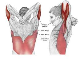 Chest And Shoulder - reaching downn chest stretch common shoulder
