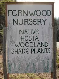 native plants for butterfly gardening benton soil u0026 water maine native plants fernwood nursery u0026 gardens page 9