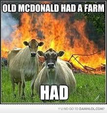 Burger Memes - 48 best burger memes images on pinterest so funny funny pics