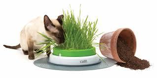 senses 2 0 grass planter catit