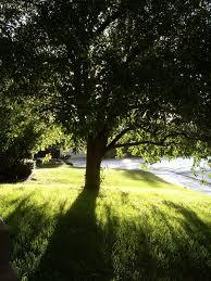 lawn aeration tips ravenna ohio care portage turf truck photo idolza