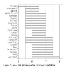 soil preparation of the vegetable garden extension