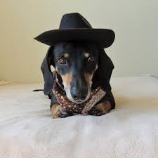 the world u0027s best photos of dachshund and halloween flickr hive mind
