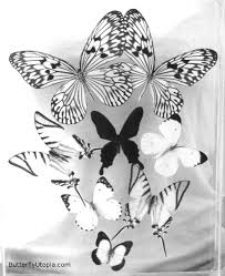 coloring pages of butterfly butterfly coloring pages butterfly crafts page drawings