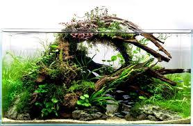 Aquascape Malaysia Aquarium Driftwood Aquariadise