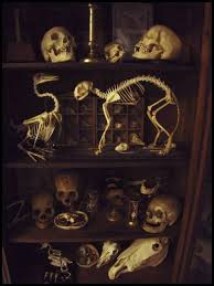 Occult Home Decor Cabinet Of Curiosities Skeletons Home Ideas Interiors