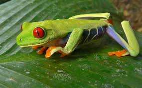 how to prevent eyed tree frog illness