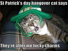 Lucky Charms Meme - st patrick s day hangover cat says they re after me lucky charms