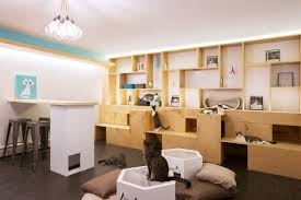 How To Design The Interior Of A House by How To Design The Purrfect Cat Cafe Co Design