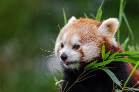 mesker park zoo u2013 events calendar