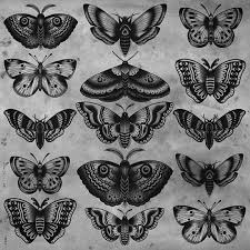 on moth traditional butterfly and